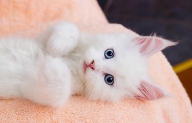 white kitten lies comfortably on Blankets