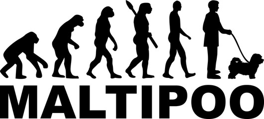 Maltipoo evolution word