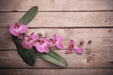orchids on old wooden background