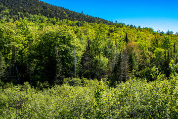 Beautiful forest in summer in Adirondacks Mountains