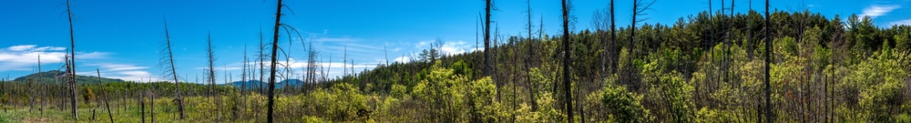 Panoramic view of a forest in the Adirondacks Mountains