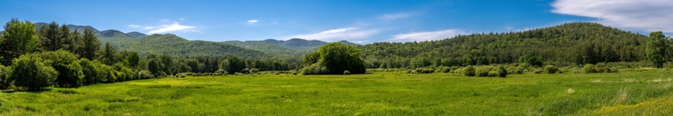 Panoramic view of a glade within a forest in the Adirondacks Mountains