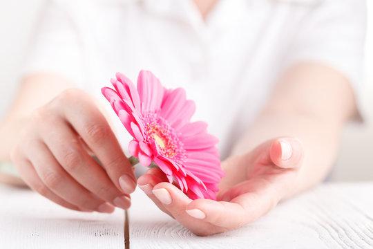 Woman hygiene conception. Pink flower gerbera in female hands