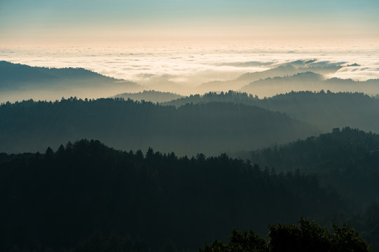 Fog and clouds rolling in over the hills of Russian Ridge in the Bay Area