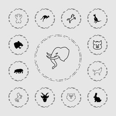 Collection of 13 mammal filled and outline icons
