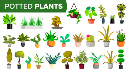 Potted Plants Set Vector. Green Color Plants In Pot. Indoor Home, Office Modern Houseplants. Various. Floral Interior Icon. Decoration Design Element. Isolated Illustration