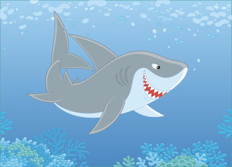 Grey reef shark swimming over a coral reef in blue water of a tropical sea, vector illustration in a cartoon style