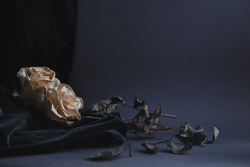 Two dried white roses on gray background with dark velvet draping