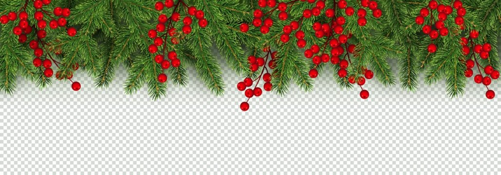 Christmas and New Year border of realistic branches of Christmas tree and holly berries