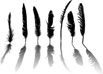 seven black feathers group with shadows