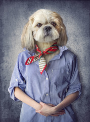 Foto op Canvas Hipster Dieren Cute dog shih tzu portrait, wearing human clothes, on vintage background. Hipster dog