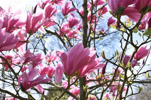 jardin des plantes de lille - Jardin Des Plantes Lille
