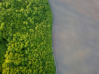 Wall Mural - Aerial view from the drone, a bird's eye view to the forest with green spaces and agricultural field with the road dividing them in half at sunset in the summer evening,