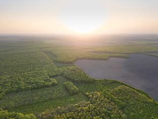 Wall Mural - Aerial view from the drone, a bird's eye view to the forest with green spaces and agricultural field at sunset in the summer evening,