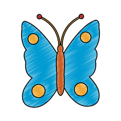 Beautiful butterfly isolated vector illustration graphic design