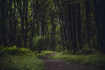 Hiking trail through a dark moody lush forest