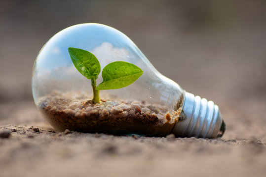 plant growing inside lightbulb for protect environment concept
