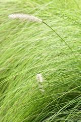 Green grass background texture.
