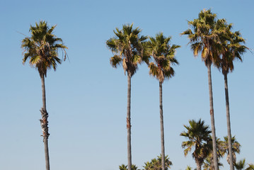 Set of palm trees against bright blue sky