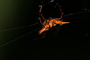 Foto op Canvas Helicopter Macro spider orange