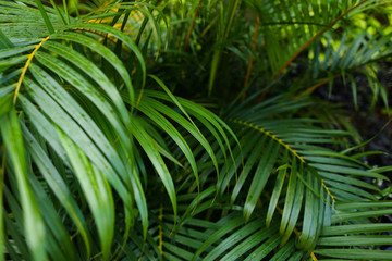 Exotic green leaves background photo. Concept of botany and foliage.