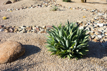 Green accent desert xeriscaping