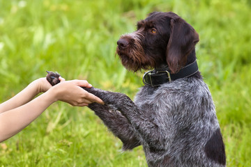 paws of dog in woman hands