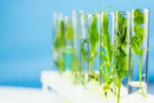 Green fresh plant in test tube. Close up.