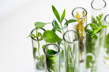 Türaufkleber Pflanzen Green fresh plant in glass test tube in laboratory on white background. Close up macro.