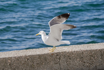 big seagull on the wall