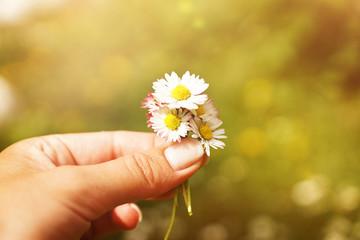 Frau hält Strauß Gänseblümchen