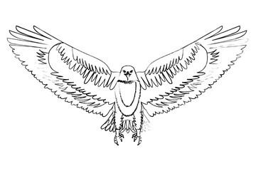 american bald eagle emblem vector illustration design