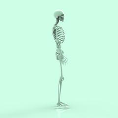 Human Anatomy Skeleton Pastel 3D Render