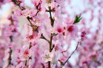 Branches with blooming flowers on blurred background