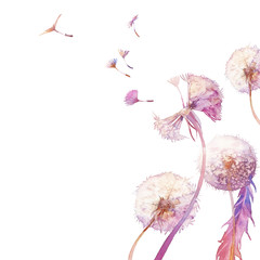 Watercolor dandelion illustration. Blowballs on white background. Hand painted card design.
