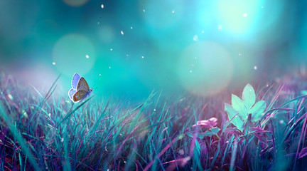 Wall Mural - Butterfly in the grass on a meadow at night in the shining moonlight on nature in blue and purple tones, macro. Fabulous magical artistic image of a dream, copy space.