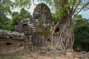 Tropical tree on Ta Som temple at Angkor complex