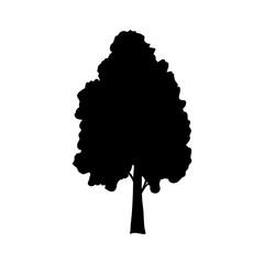 Silhouette birch icon tree flora