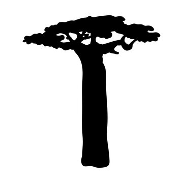 Silhouette baobab icon tree flora
