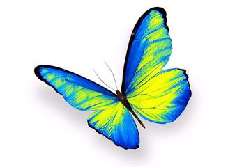Яркая бабочка с сине-жёлтыми крыльями изолирована на белом фоне