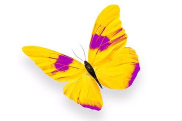 Бабочка с большими жёлтыми крыльями и фиолетовыми пятнами на них, изолирована на белом фоне