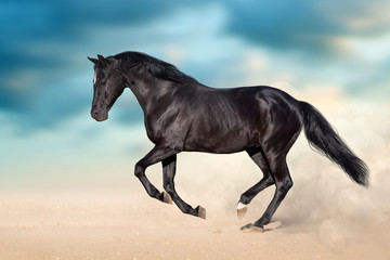 Wall Mural - Black stallion with long mane run in desert dust against  blue sky