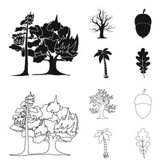 Burning tree, palm, acorn, dry tree.Forest set collection icons in black,outline style vector symbol stock illustration web.