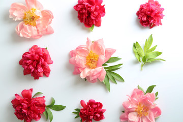Composition with beautiful peony flowers on white background