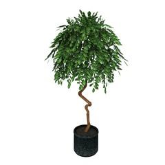 decorative green plant