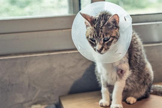 old sickness cat