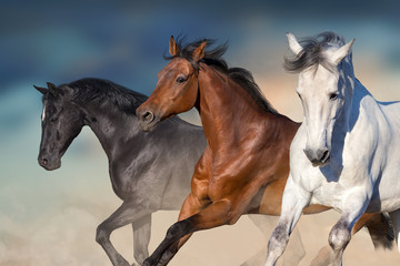 Wall Mural - Horses run gallop in desert against sky