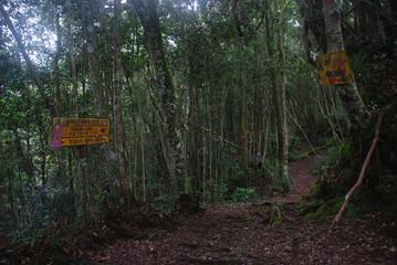 Jungle trail through Cameron Highlands, Malaysia