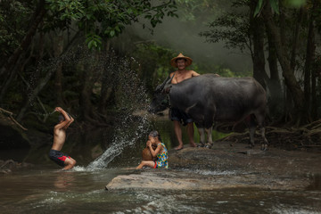 Lifestyle of family farmer at rural Asia. Traditional life of famer in countryside Thailand. The joy of children with buffalo in the river at the forest.