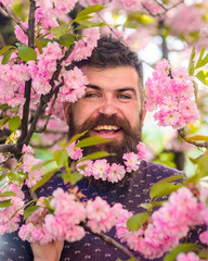 Man with beard and mustache on happy face near pink flowers. Bearded man with fresh haircut with bloom of sakura on background. Unity with nature concept. Hipster with sakura blossom in beard.